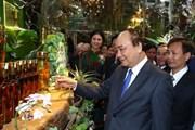 Để sâm Ngọc Linh ghi dấu ấn lịch sử mới cho ngành dược liệu Việt Nam
