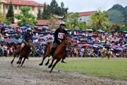 Gay cấn giải đua ngựa truyền thống trên cao nguyên Bắc Hà năm 2019