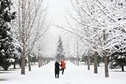 Ngắm nhìn tuyết rơi đầu mùa tại thủ đô Bắc Kinh của Trung Quốc