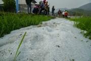 [Photo] Ruộng lúa, sân vườn ở Điện Biên bị mưa đá phủ trắng