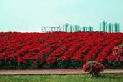 Chiêm ngưỡng thiên đường hoa bốn mùa khoe sắc tại Ecopark