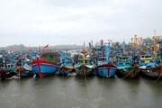 Toàn tỉnh Quảng Ngãi còn hơn 1.100 tàu cá chưa vào bờ trú bão