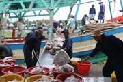 Khắc phục thẻ vàng IUU: Nhiều nơi ở Bình Định chưa làm quyết liệt