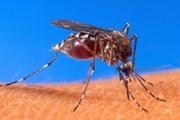 Virus Tây sông Nile bùng phát ở vùng Đông Bắc Italy, 3 người tử vong