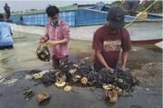Xác cá voi với 6kg rác thải nhựa trong dạ dày trên bờ biển Indonesia