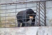 Ra mắt phim ngắn kêu gọi cộng đồng không sử dụng mật gấu