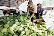 Lạng Sơn chủ động quảng bá cho sản phẩm đặc sản na 'Chi Lăng'