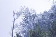 Hình ảnh băng tuyết xuất hiện, phủ kín đỉnh Khoan La San-A Pa Chải