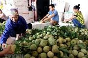 Tổ chức Tuần lễ Na Chi Lăng và đặc sản Lạng Sơn vào tháng Tám