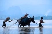 Hai nhiếp ảnh gia mang 'Sắc màu Việt Nam' tới Áo và Hy Lạp