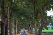Những cung đường tuyệt đẹp chào đón vận động viên Marathon tại Pleiku