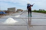 Diêm dân Bạch Long chật vật bám nghề muối của quê hương
