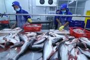 Giải bài toán thị trường đầy thách thức cho cá tra Việt Nam