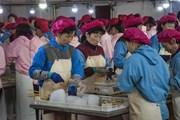 Kim ngạch thương mại năm 2017 của Triều Tiên giảm do trừng phạt