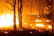 """Hàng chục vụ hỏa hoạn """"thiêu đốt"""" cả miền Bắc Tây Ban Nha"""