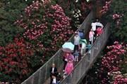 [Video] Đi tìm lối thoát trong mê cung hoa hồng khổng lồ