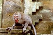 [Video] Singapore ghi nhận ca nhiễm bệnh đậu khỉ đầu tiên