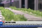 [Video] Nông trại thông minh dưới tàu điện ngầm ở Hàn Quốc