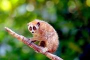 Hình ảnh Sơn La thả động vật hoang dã về với môi trường tự nhiên
