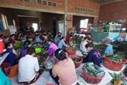 Hình ảnh người dân gói bánh tét gửi đồng bào miền Trung