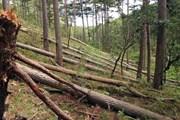 Hình ảnh rừng phòng hộ đầu nguồn tại Lâm Đồng bị 'xà xẻo'