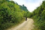 [Photo] Hoa dã quỳ rực rỡ phủ vàng rực rỡ khắp núi đồi Điện Biên