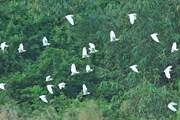 [Photo] Khám phá vẻ đẹp nguyên sơ kỳ thú tại vườn chim Thung Nham