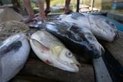 [Photo] Hòa Bình: 30 tấn cá lồng chết do sặc bùn nước sông Đà