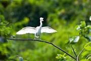 Ninh Bình: Tăng cường bảo tồn thiên nhiên, giữ gìn sự đa dạng sinh học