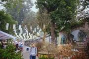 Cây hoàng mai 120 tuổi giá 4 tỷ đồng xuống chợ hoa truyền thống Hà Nội