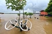 Bãi giữa sông Hồng 'chìm nghỉm' trong biển nước vì lũ dâng cao
