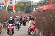 Dạo quanh chợ hoa lớn nhất Thủ đô trước thềm Tết Tân Sửu 2021