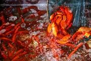 Cá chép đỏ tăng giá mạnh ở Thủ đô trước ngày ông Công, ông Táo