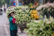 [Photo] 'Hoa của tháng Tư' khoe sắc trên phố phường Hà Nội