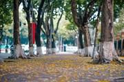 [Photo] Có một Hà Nội đẹp mơ màng trong mùa lá sấu bay
