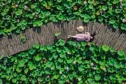 [Photo] Ngắm đầm sen nở rộ giữa trời mùa Hè ở Hang Múa