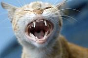 """[Video] Kế hoạch """"triệt tiêu"""" loài mèo vì lợi ích thiên nhiên"""