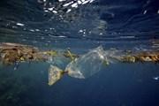 Rác thải trong môi trường là chủ đề trọng tâm Hội nghị Bộ trưởng G7
