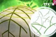 [Video] Đột phá nấm sinh học và vi khuẩn để tạo ra điện