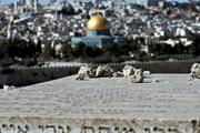 AL kêu gọi tuân thủ luật pháp quốc tế liên quan quy chế của Jerusalem