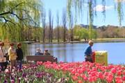 Lễ hội hoa Floriade 2019 đầy màu sắc tại thủ đô Canberra