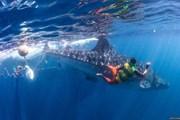[Video] Lực lượng cứu hộ tìm cách giải cứu chú cá voi bị kẹt vào lưới