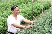 'Nâng hạn mức cho vay nông nghiệp nông thôn để hạn chế tín dụng đen'