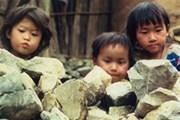 8 bộ phim dự Tuần lễ phim Tài liệu Quốc tế tại VN
