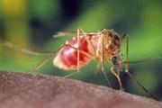 Báo động dịch virus Tây sông Nile lan rộng tại Serbia