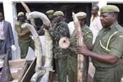 Kenya thu giữ lượng lớn ngà voi, sừng tê giác
