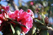 [Photo] Những đóa hoa bung nở tuyệt đẹp trên đỉnh núi Tây Bắc