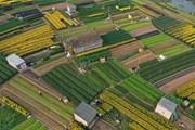 [Photo] Ngắm cánh đồng hoa Viên Sơn rực rỡ sắc màu ngày Xuân