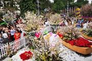 [Photo] Nô nức tham quan, thưởng lãm hoa Anh đào tại Hà Nội