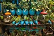 [Photo] Ngắm những chậu cây xinh xắn được làm từ phế thải